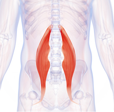 hip flexor muscle - Unlock Your Glutes - Conversion Monster!