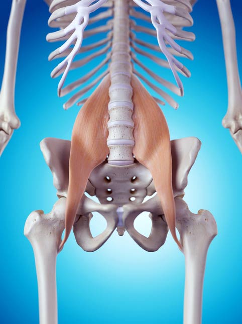 psoas - Unlock Your Glutes - Conversion Monster!