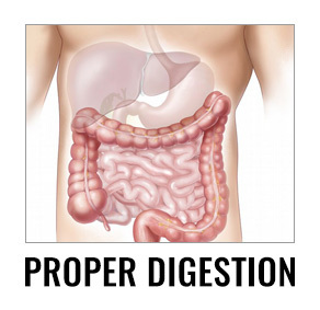 proper digestion - Unlock Your Glutes - Conversion Monster!